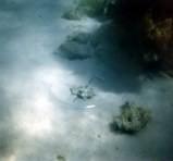 Restos de ruedas incrustado por el coral