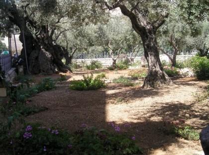 foto-israel-041