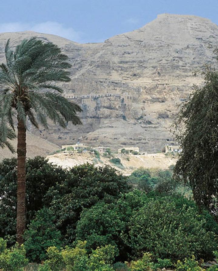 Vistas de vegetación en Jericó