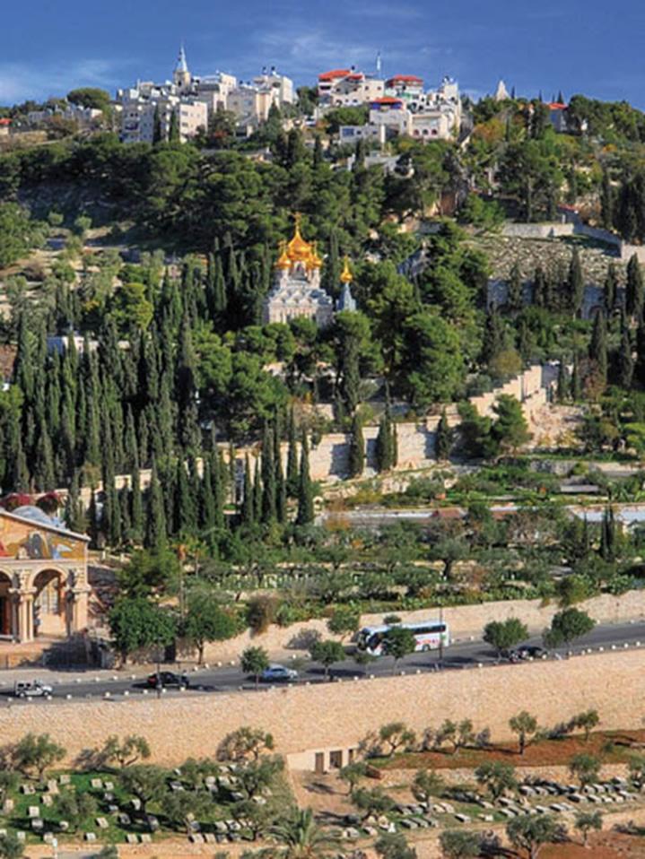 Monte de los olivos al fondo y Huerto de Getsemaní en primer plano.