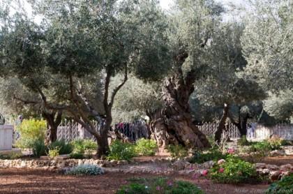 Jardin-Getsamani-Jerusalen