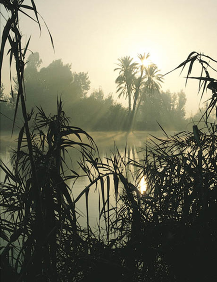 Vegetación a orillas del río Nilo